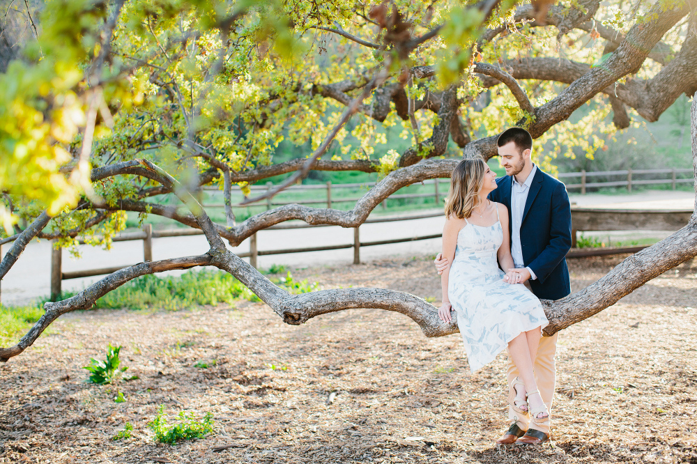 Kara sitting on a tree branch.